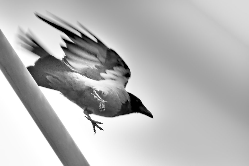 """Quoth the raven: """"Nevermore"""""""
