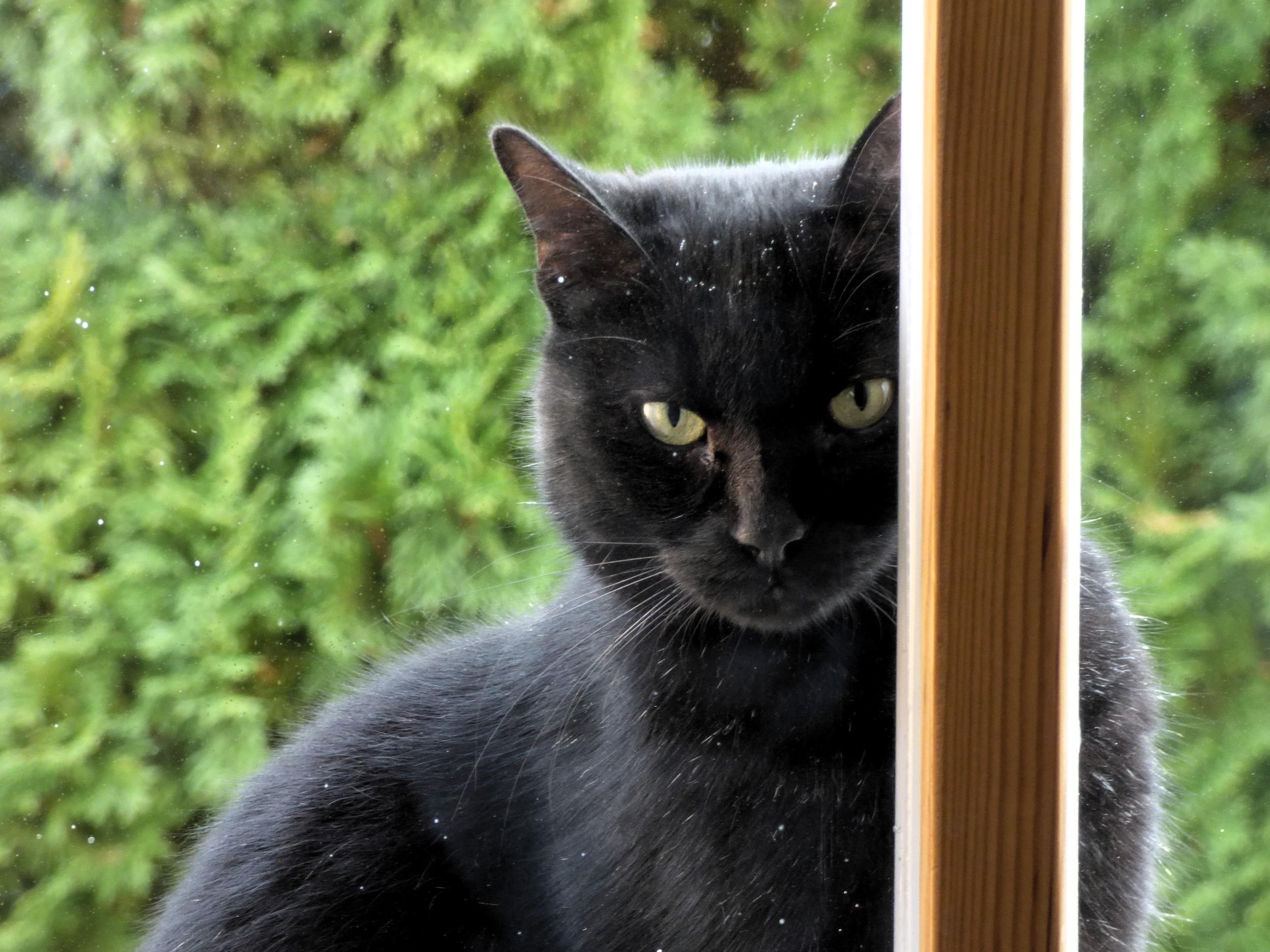 Eyes on: Katzenfotos