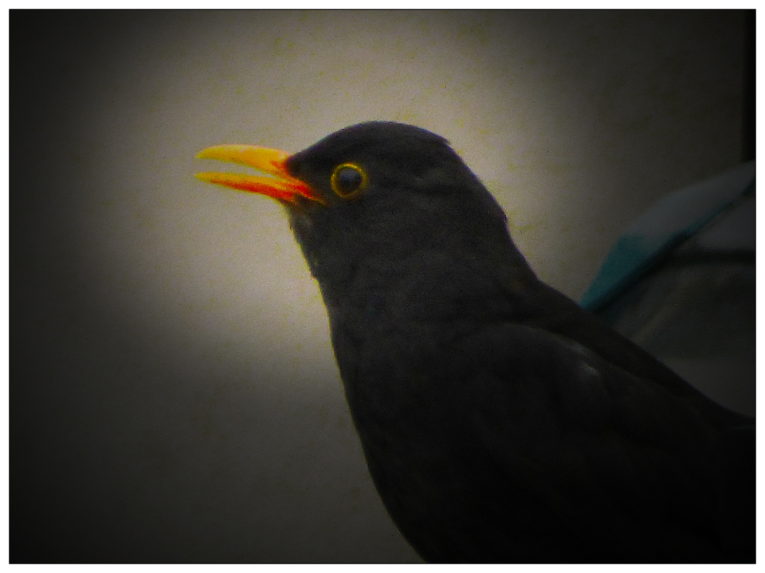vogel_zaun