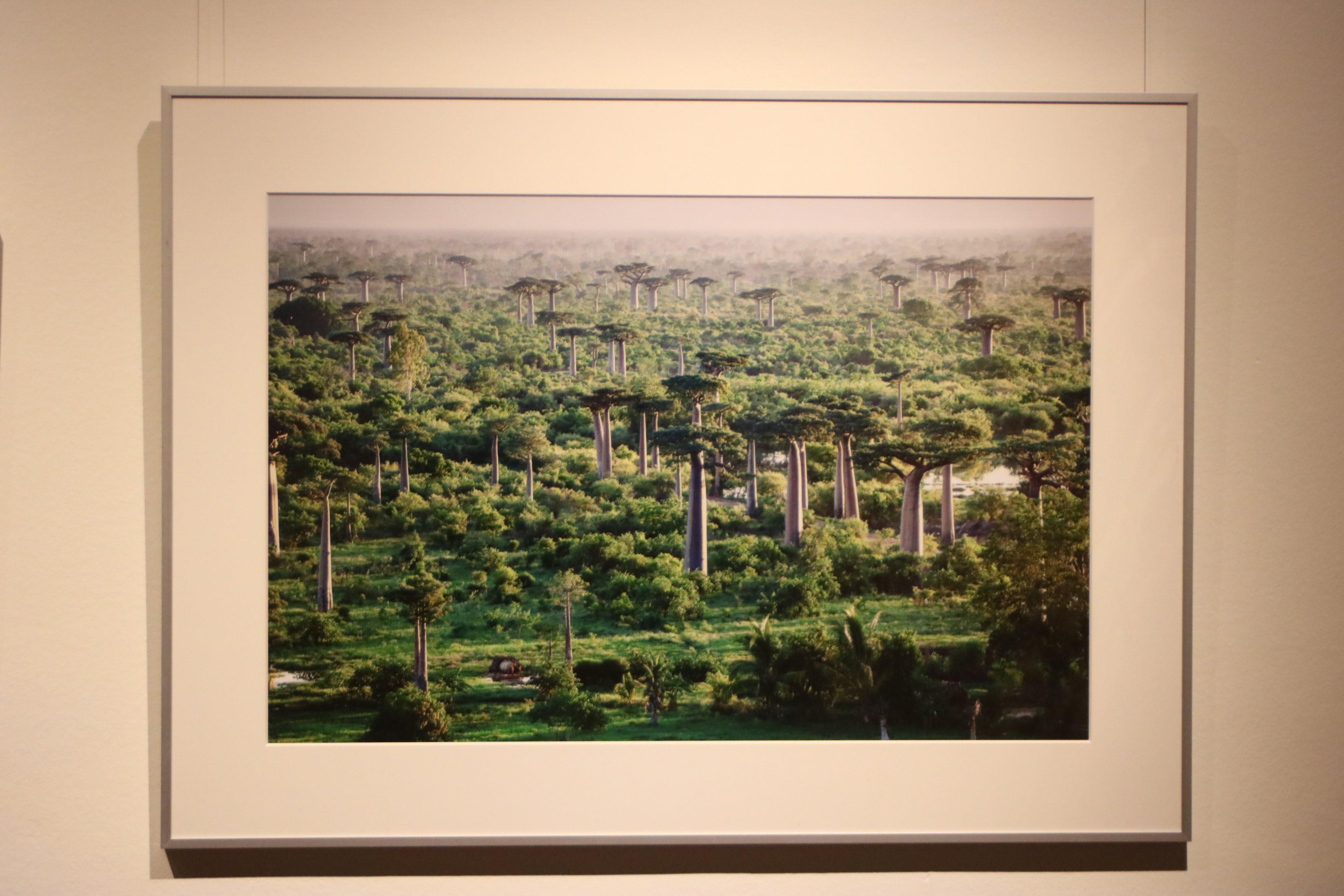 Baobab – eine außergewöhnliche Fotoausstellung im Naturhistorischen Museum Wien